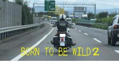 BORN TO BE WILD2-2