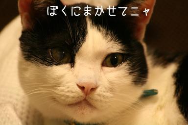 ちぃくんキュピーン☆だけど、はっちぃにカミカミケリケリしないでね。