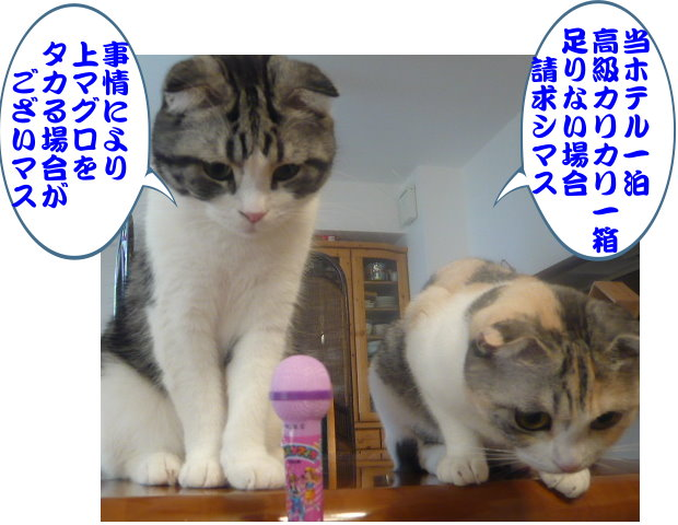 タカリB.jpg