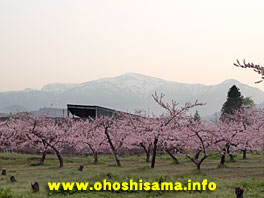 磐梯山と桃の花