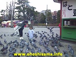 浅草寺の鳩