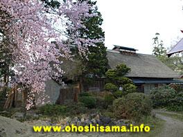 茅葺古民家と桜