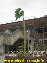 台風に耐える樹