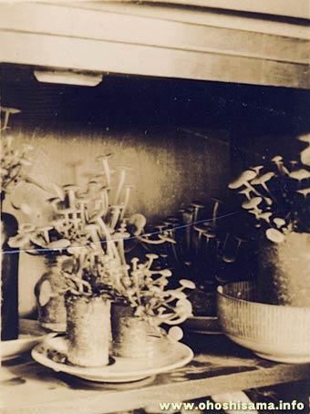 昭和12年頃 キノコ栽培