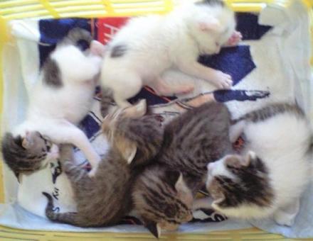 小さな小さな子猫たち…