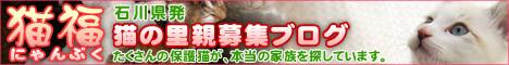 猫福<にゃんぷく>石川県発猫の里親募集ブログ