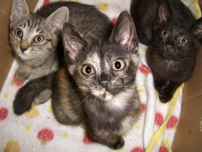 志雄の子猫たち