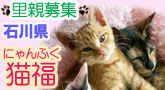 猫福〈にゃんぷく〉猫の里親募集ブログ