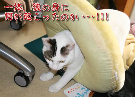 美猫・・・????