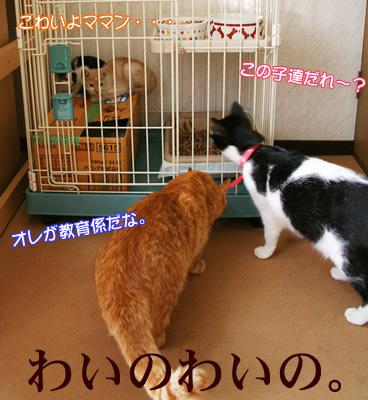 おびえる子猫たちに無遠慮に興味津々な猫たち。