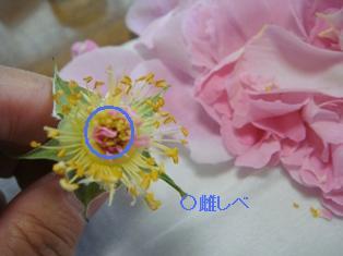18kohai23050605.JPG