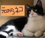 元野良猫バナー にほんブログ村 猫ブログ