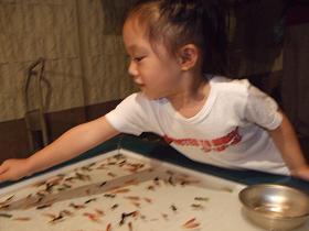 俄然ノッテきました。なんと、、、三歳のサラ。見事金魚すくい1匹すくいました。嬉.JPG