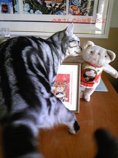 有田ひろみ 白猫