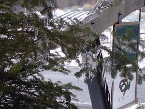 木々の氷柱