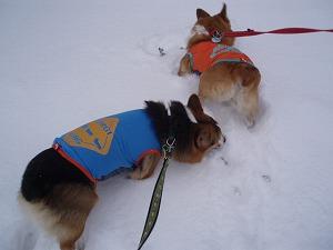 今年初の雪遊び