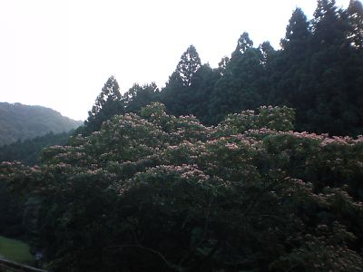 20100717Takayama002s