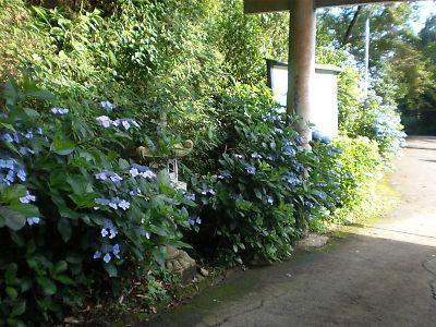 20100717Takayama017s