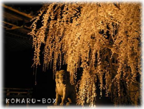 野依の枝垂れ桜2