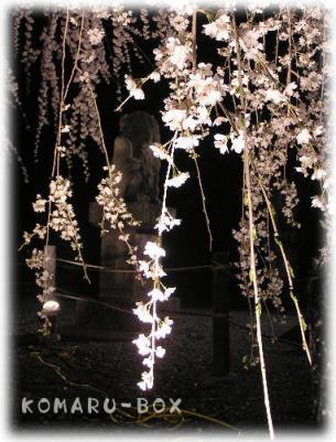 野依の枝垂れ桜3