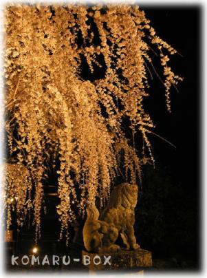 野依の枝垂れ桜4