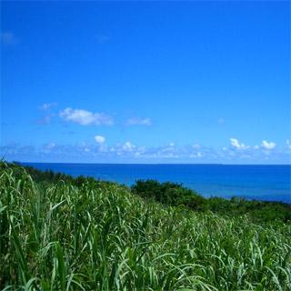 沖縄の海の風景23 さとうきび畑 | おきなわ Lite - 楽天ブログ