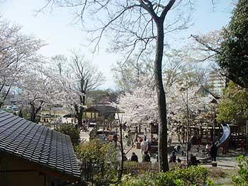 5(岐阜公園の桜)