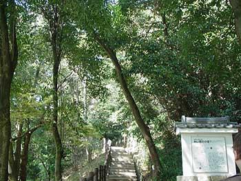 6(山の散歩道)