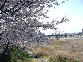 10(長良川沿いの桜)