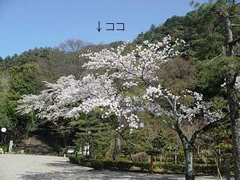 4(岐阜公園 岐阜城と桜)