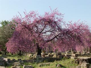 アーモンドの木.JPG