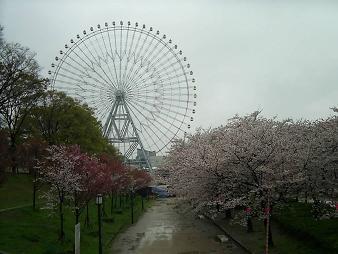 天保山の桜 と観覧車 (2).JPG