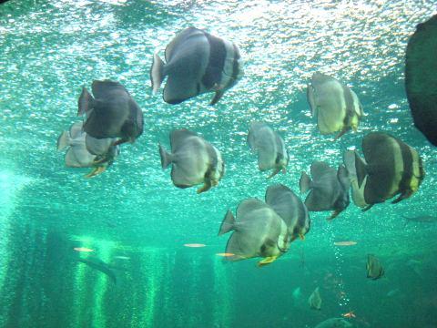 箱根水族園