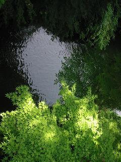 こおろぎ橋からの鶴仙渓