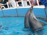 美ら海 イルカ