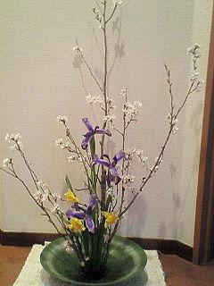 2008年3月 桜・アイリス・水仙