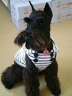 犬と生活の服CI.jpg