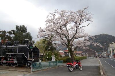 SLと桜とZZR