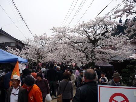 新庄がいせん桜祭1