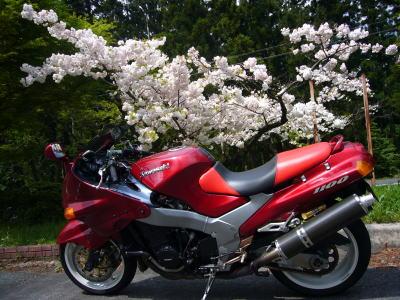 八重桜とZZR6