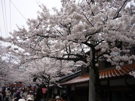 新庄がいせん桜祭3