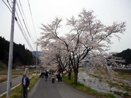 新庄がいせん桜祭4