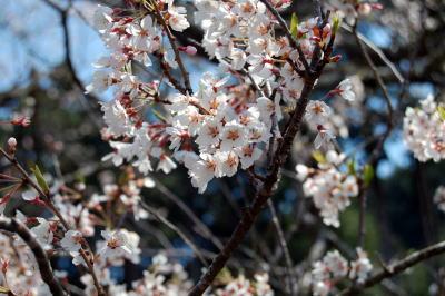 岩井畝の大桜2