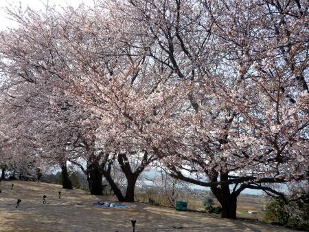 大塚山公園2