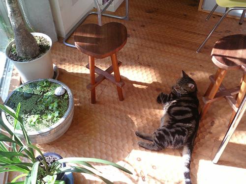猫椅子061204.jpg