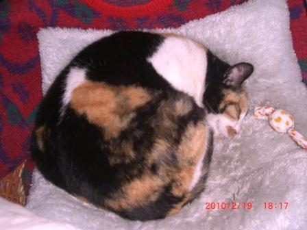 当館の主人<美衣姫>が、笑顔で寝ています。何の夢を見ているのかなあ