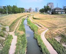 台風一過の笊川-5月20日.jpg