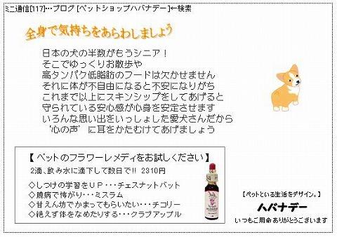 ミニ通信117号.jpg