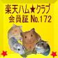 No.172ぷりりん(ゴールデンハムスター♂)