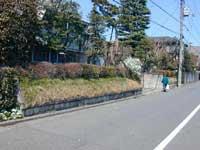ユキヤナギ2.jpg